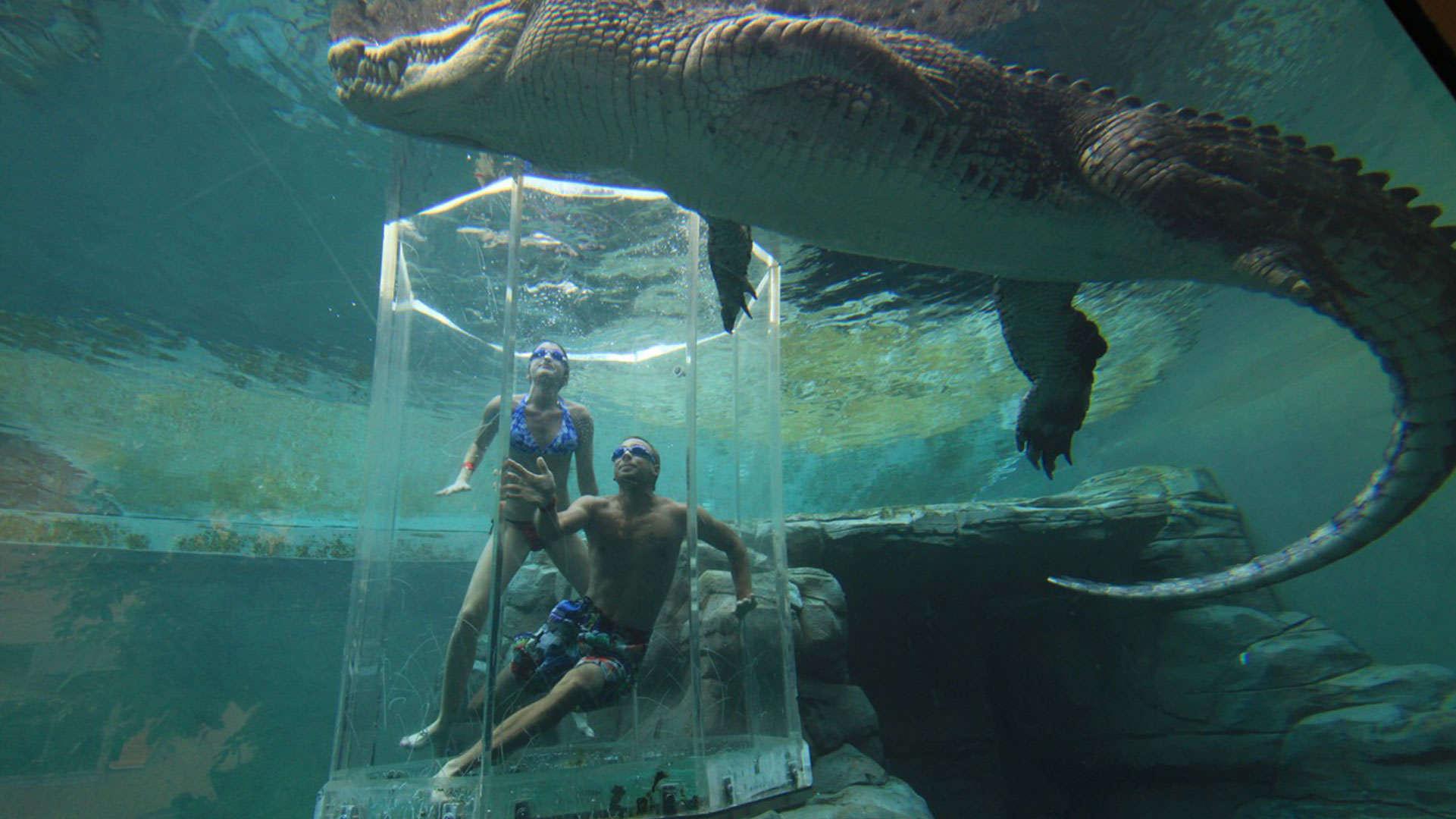 Cage of death crocosaurus cove crocodile park darwin australia
